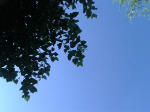 Sueños de verano